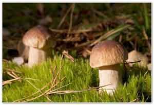 О пользе грибов