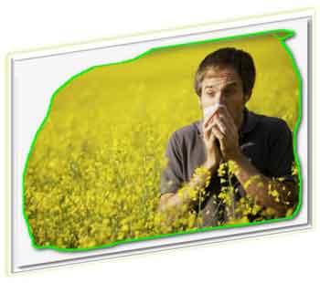 аллергия ринит поллиноз