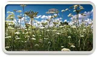 Как заготавливать травы