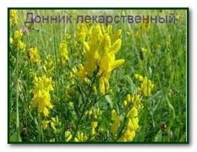 Лечение хордомы травами