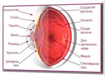 Для укрепления сетчатки глаза