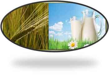 Ячмень и молоко в лечебных целях