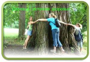 О лечебной силе деревьев.