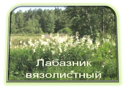 Трава таволга фото где растет
