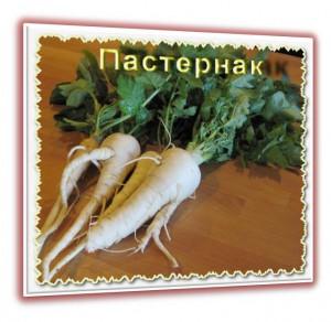 Пастернак-вкусное и полезное растение