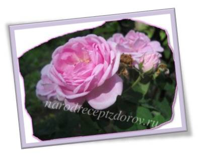 Рецепты с лепестками роз