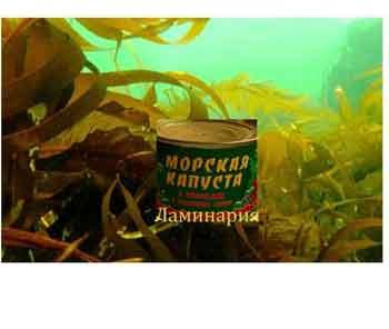Чем полезна бурая водоросль ламинария