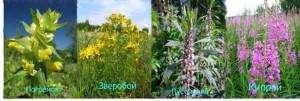 Лечение и обезболивание травами