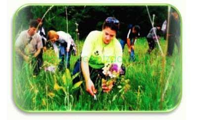 когда собирать лечебные травы