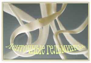 Гельминты или глисты-это черви-паразиты.Глисты-болезнь очень опасная и с ней нужно бороться.Рецепты народных средств от глистов