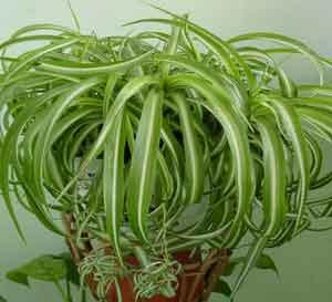 полезные растения в доме
