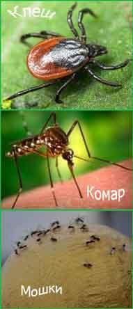 Защита от клещей и мошек