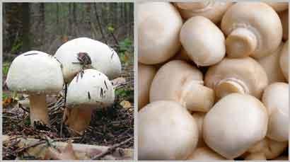 Блюда с грибом шампиньон
