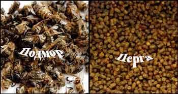 Лечебные дары от пчел