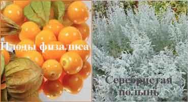 болгарские целители