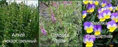 травы от кашля