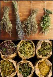 лечим кашель травами