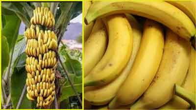 банан-полезный фрукт